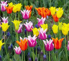 Beautiful Flowers Image Flowers For Flower Lovers Beautiful Flowers Desktop Wallpapers