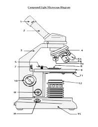 compound light microscope diagram sketch coloring page