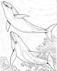 dolphin coloring pages pdf two dolphin coloring page coloring page free dolphin coloring