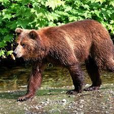 Alaska wildlife tours images Wildlife tours of sitka alaska usa today jpg