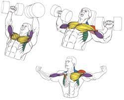 Incline Bench Muscle Group Exercises Guide With Pictures Slavbody Com