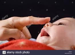 Small Tiny Short Nose Stock Photos U0026 Short Nose Stock Images Alamy