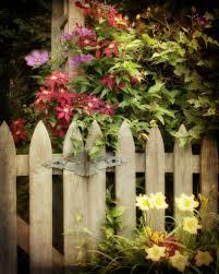 garden photograph wooden gate flowers clematis country