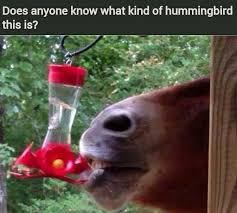 name an animal with 3 letters in its name meme by evanse