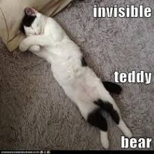 Invisible Cat Meme - a big cat and an invisible boarlines funny funny pinterest cat