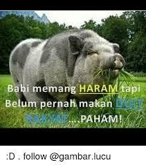 Meme Babi - babi memangharamtapi belum pernatimakan beの d follow baby it s