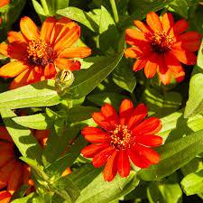 heat loving plants south central gardening heat loving flowers