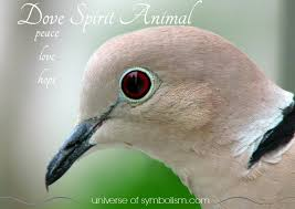 dove symbolism dove meaning dove spirit totem powers