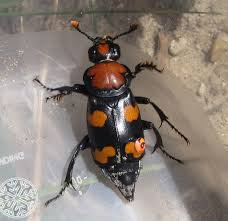 list of state insects state symbols usa