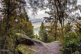 s chsische k che wallpaper forest nature park river canon phone wilderness