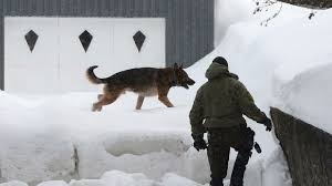 belgian shepherd killed suspects named after 6 killed in canada mosque shooting wsbt