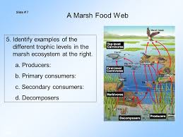 energy flow in ecosystems u0026 the biosphere important vocabulary 1
