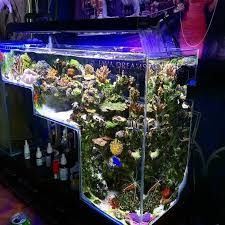 Reef Aquascape Designs 11 Best Aquarium Images On Pinterest Aquarium Ideas Aquatic