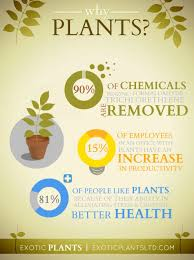 design inspiration for the home good benefits of plants in the home 33 for small home decor