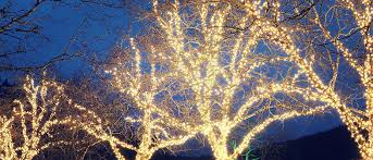 how to wrap christmas lights around a tree how to wrap trees with christmas lights
