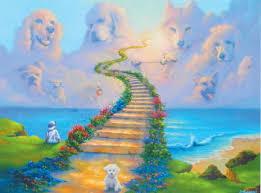 dog condolences pet sympathy cards dog sympathy cards cat sympathy cards pet loss