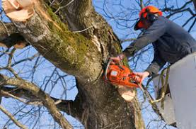 tree trimming and removal indiana pa wingerter tree service