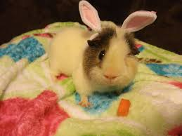 like a bunny nicole u0027s bunny blog