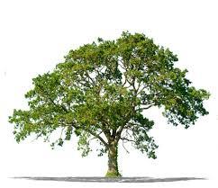 tree removal arbormax tree service