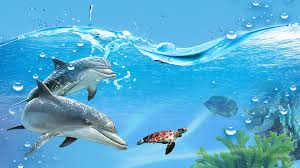dolphin play water sea underwater ocean blue fish dolphins bubbles