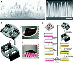diamond nanostructures for drug delivery bioimaging and