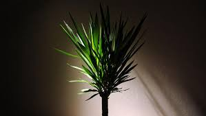 Plants That Grow In Dark Rooms | 5 houseplants that thrive in dark apartments