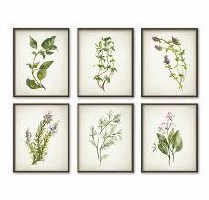 herbe cuisine ensemble imprimé herbe de 6 herbes du jardin peinture à