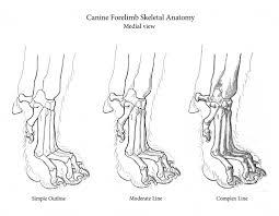 cat bones anatomy human anatomy library