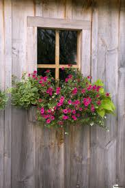 Wooden Window Flower Boxes - wooden shed with a flower box under the window flesherton