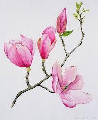Japanese Flower Artwork - 206 best магнолии images on pinterest flowers painting and