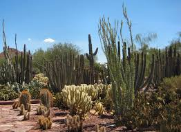 Scottsdale Az Botanical Gardens by Phoenix In One Day Top Attractions Visit A City