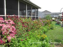 native plant garden design small home decoration ideas cool to
