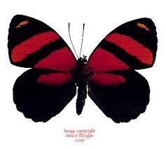 121 best butterflies images on butterflies bugs and