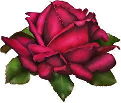 imagenes bonitas que brillen healthyvibez imagenes de flores bonitas que brillen