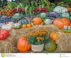 thanksgiving season thanksgiving produce display stock photo image 60775908