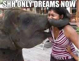 Shh Meme - shh only dreams now elephants know your meme
