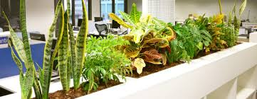 the best office plants for happy workers love the garden