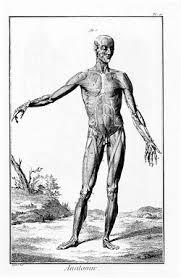 anatomy new world encyclopedia