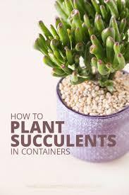 best 25 indoor succulent planter ideas on pinterest succulents