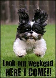 Weekend Dog Meme - weekends funny dogs cute that s funny pinterest