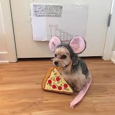 human dog costumes for halloween barkzilla a savvy nyc dog blog pizza rat dog costume