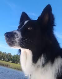 usda certified organic aloe dog shampoo unscented and