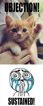 Funny Kitten Meme - top ten cute cute kitten memes