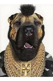 112 best dog costumes images on pinterest dog costumes animals