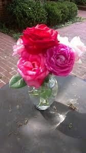 a rose garden of memories beautifulgardener