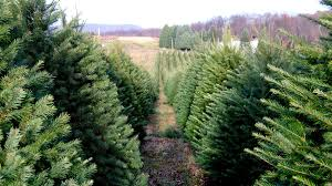 labor of love the story of one christmas tree farm racked