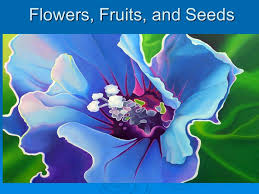flowers and fruits flowers fruits and seeds ppt