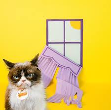 Image 9 Best Grumpy Cat - cat s out of the bag grumpy cat reveals her top ten pet peeves in
