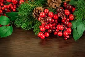 plant holly holly berries red leaves branch cone christmas tree