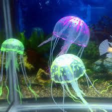 jellyfish home decor free jellyfish art fine art photography